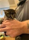 Kittens at Rowlett Animal Shelter