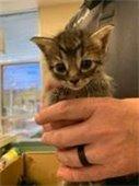 Kittens at the Rowlett Animal Shelter