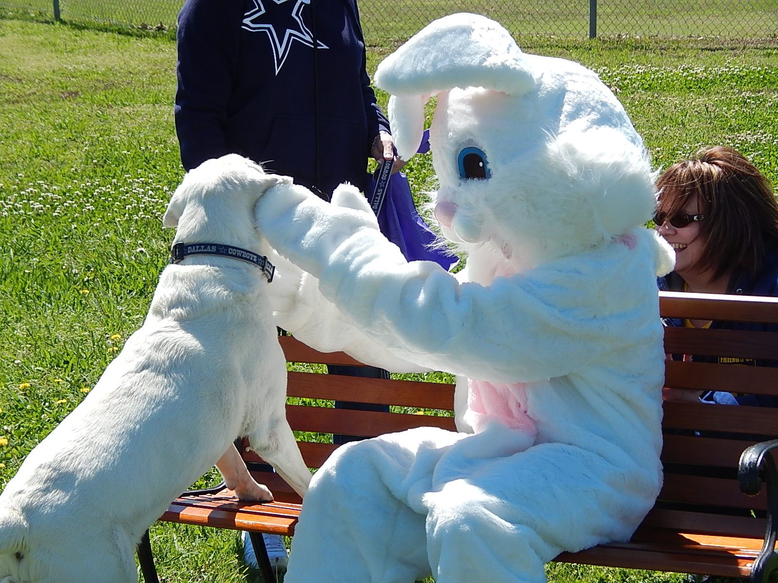 Image result for image, photo, picture, easter pup